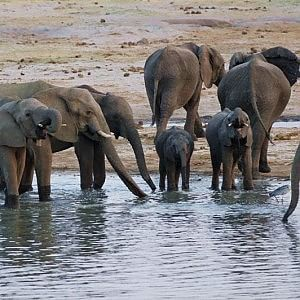 """""""Stop al massacro degli elefanti"""", via al sit in degli animalisti"""