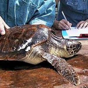 Apre il primo centro regionale di recupero di tartarughe for Vasche x tartarughe