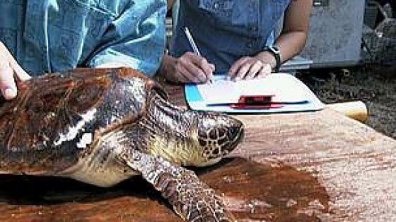 Apre il primo centro regionale di recupero di tartarughe for Vasche per tartarughe marine