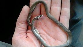 """Il serpente """"velenoso"""" e la bonifica per errore   di MARGHERITA D'AMICO"""