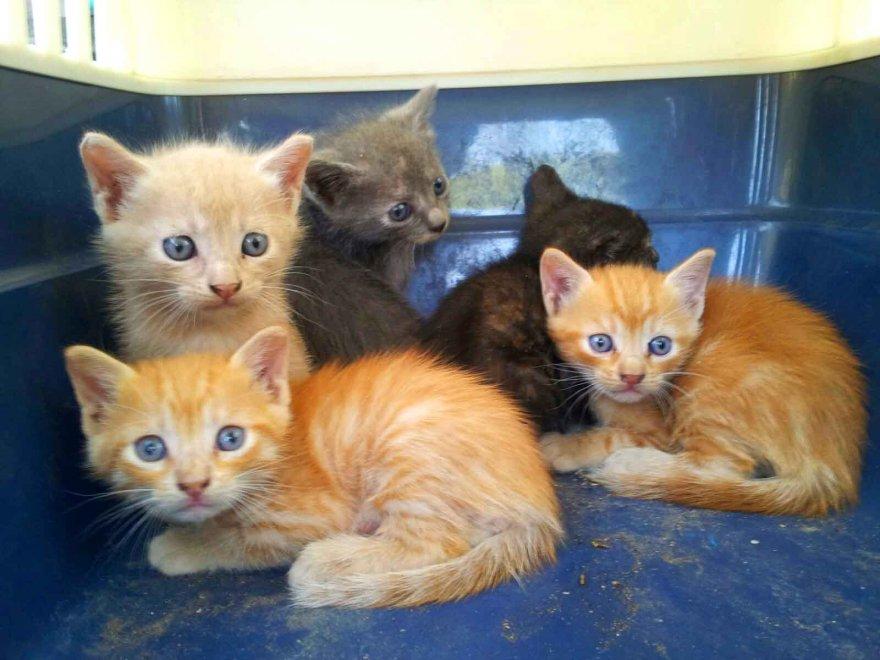 Eur gattini abbandonati e salvati dai vigili cercasi for I gattini piccoli