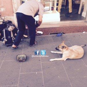 Cani maltrattati e usati per mendicare, due denunce. Salvati tre animali