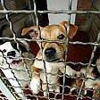 Maltrattamenti ad animali a processo la titolare  di un canile sulla Prenestina