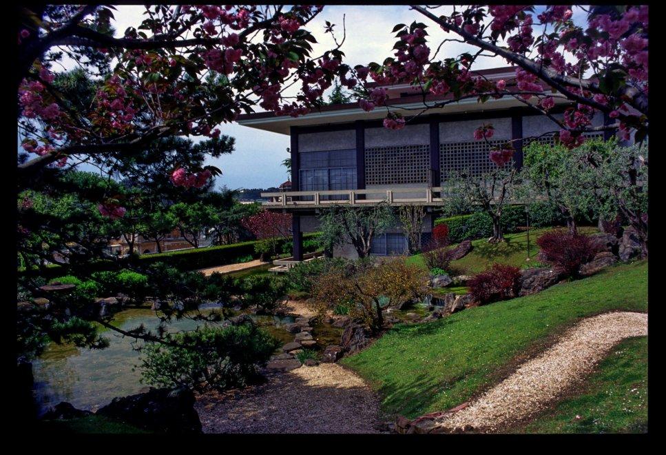 Ciliegi iris e pini nani riaprono le visite ai giardini for Architetto giardini roma