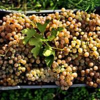 Alle Terme di Caracalla una fiera dedicata ai vini naturali