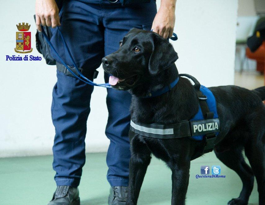Dopo Sette Anni Di Servizio Il Cane Poliziotto Gastone Va In