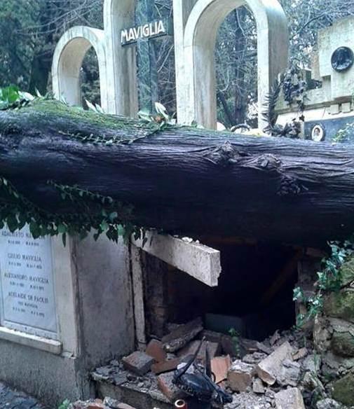 Roma, maltempo: alberi in caduta libera. Gli effetti del disservizio giardini