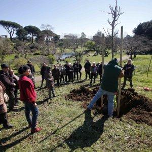 Roma, quei 7 alberi a Villa Pamphili per ricordare gli ecoeroi