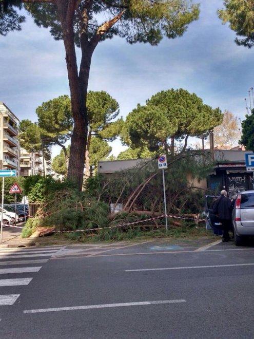 Roma, crolla nella notte ramo albero su marciapiede asilo a Conca d'Oro