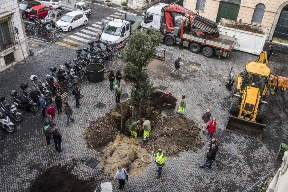 Roma, Piazza della Quercia ritrova il suo albero