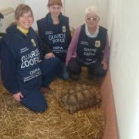Castelli romani, tartaruga africana di oltre 40kg ritrovata in strada