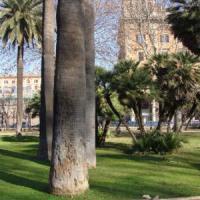 Roma, nido di calabroni nell'area giochi. Chiusi i giardini di piazza Vittorio
