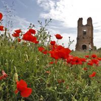 Roma, in migliaia a piedi e in bici per festeggiare l'Appia Day