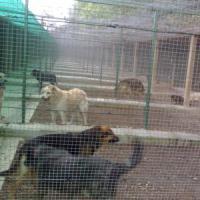 Roma, l'unico parco canile pubblico abbandonato dal Comune
