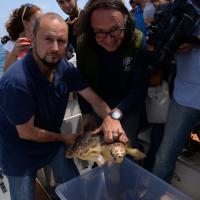 Ostia, tornano libere le tartarughe Caretta Caretta