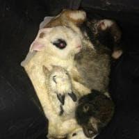 Roma, salvata a Villa Ada una famiglia di conigli chiusa in un sacchetto
