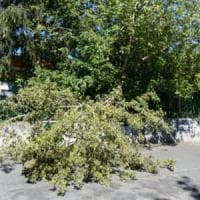 Roma, cade ramo davanti a un asilo nido, nessun ferito