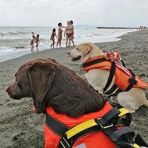 Pescia Romana, sessantenne rischia di affogare: salvato da tre cani bagnino