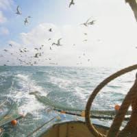 """I predatori del mare con le reti a strascico """"Così sfuggiamo alle motovedette"""""""