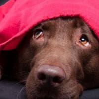 Ostia, botte al cagnolino in uno stabilimento balneare: denunciata