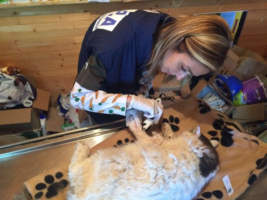 Amatrice, a 16 giorni dal terremoto ritrovato  il gatto Pietro