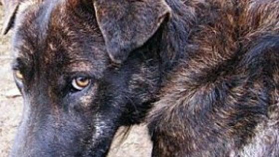 Roma, allarme polpette avvelenate a Montesacro e Trionfale: cani a rischio