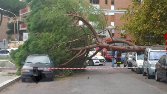 Roma, albero cade vicino all'ingresso di una scuola all'Infernetto