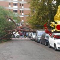 Vento a Roma, albero cade in un parco al Nomentano