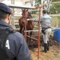 Latina, dopo il sequestro dei cavalli, abbattute anche le stalle abusive dei Di Silvio