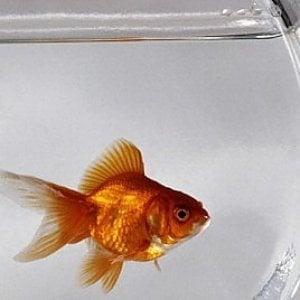 Roma pesci rossi per testare finestra multato esercente for Piscina per pesci rossi