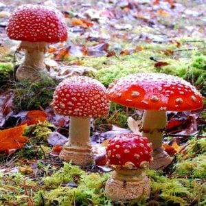 """Roma, """"I funghi e il bosco"""" in mostra il 5 e il 6 novembre al Semenzaio di San Sisto"""