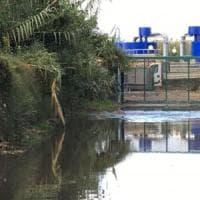 Maccarese, liquami dal depuratore: sospese le attività dell'oasi Wwf