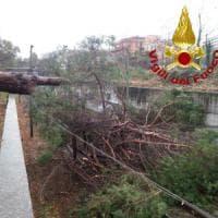 Roma, pioggia e vento: albero cade su auto ai Parioli. Due feriti