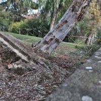 Roma, albero crolla: