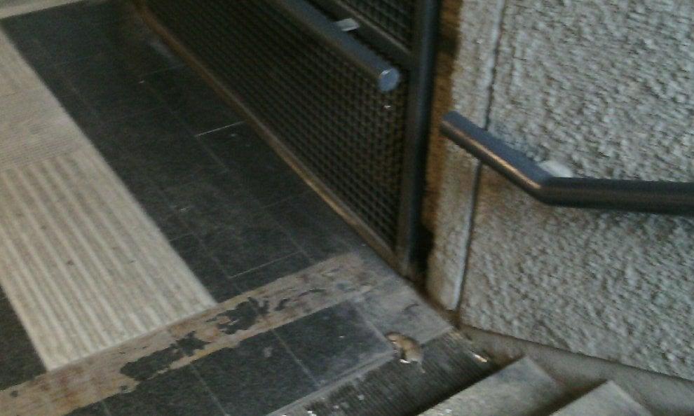 image Sulle scale della metro