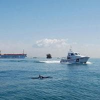 Siglato accordo per tutelare i delfini del mare di Roma