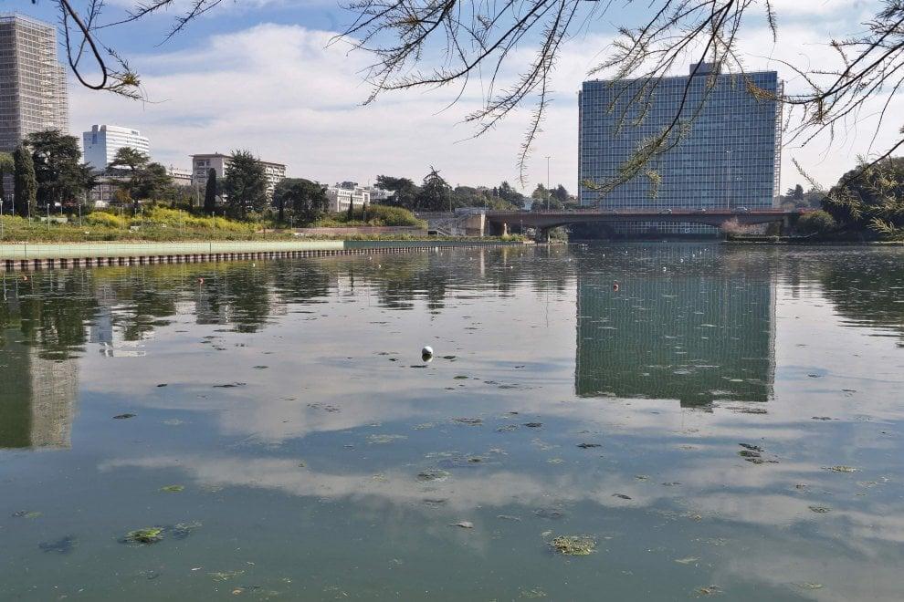 Roma alghe e mucillagine nelle acque del laghetto all 39 eur for Alghe laghetto