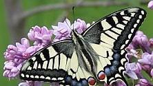 Da bruco a crisalide    foto      ecco la casa delle farfalle