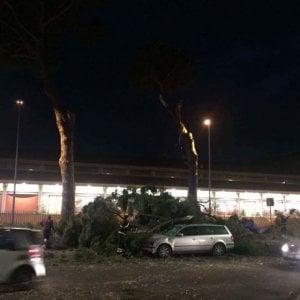 Roma,  Sulla Cassia pino di 20 metri crolla su auto: grave il conducente