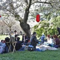 Roma, i ciliegi in fiore al laghetto dell'Eur