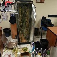 Roma, Ottaviano, coltivava marijuana nell'armadio: arrestato