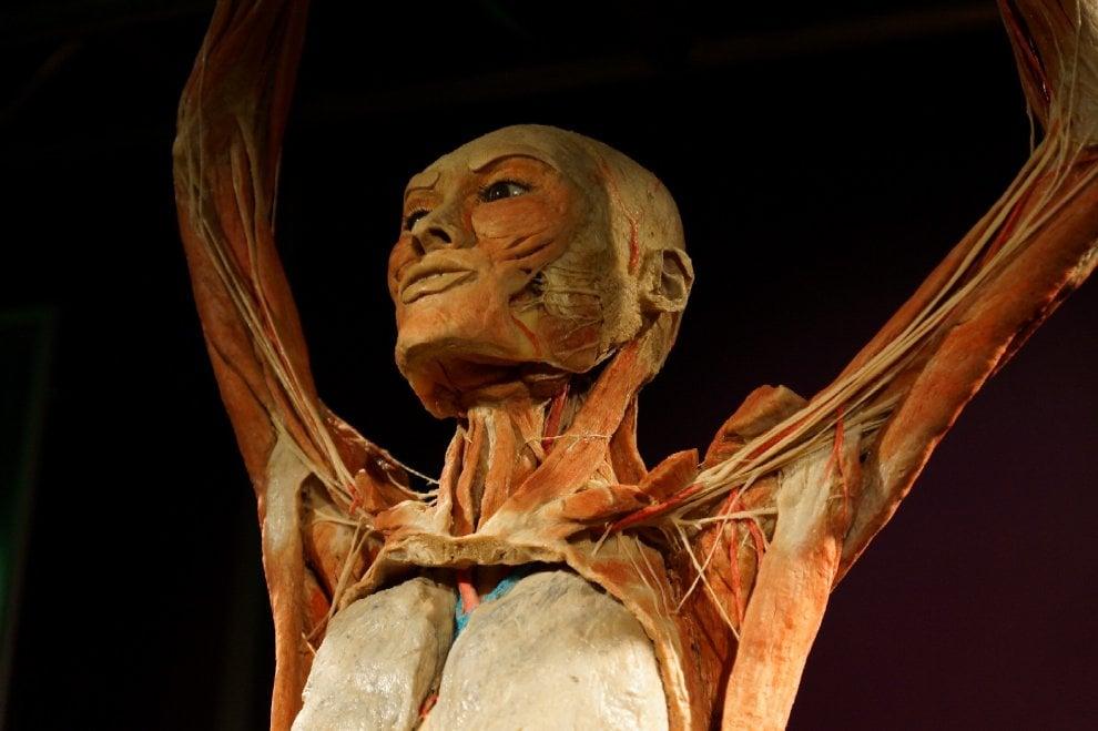 Roma, tredici malori alla mostra Real Bodies: sospese le performance