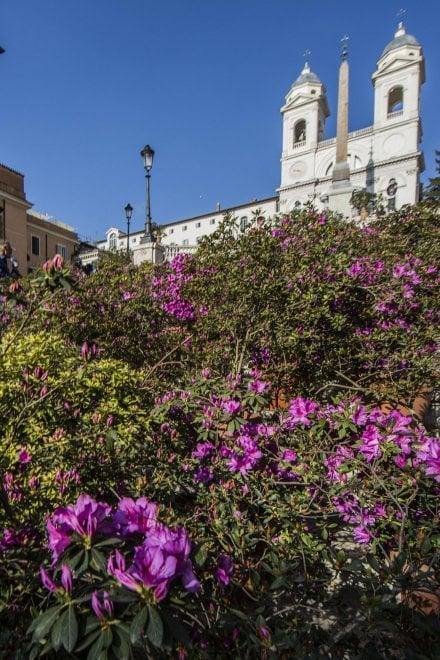 Roma, Sulla scalinata di Trinità dei Monti tornano le azalee