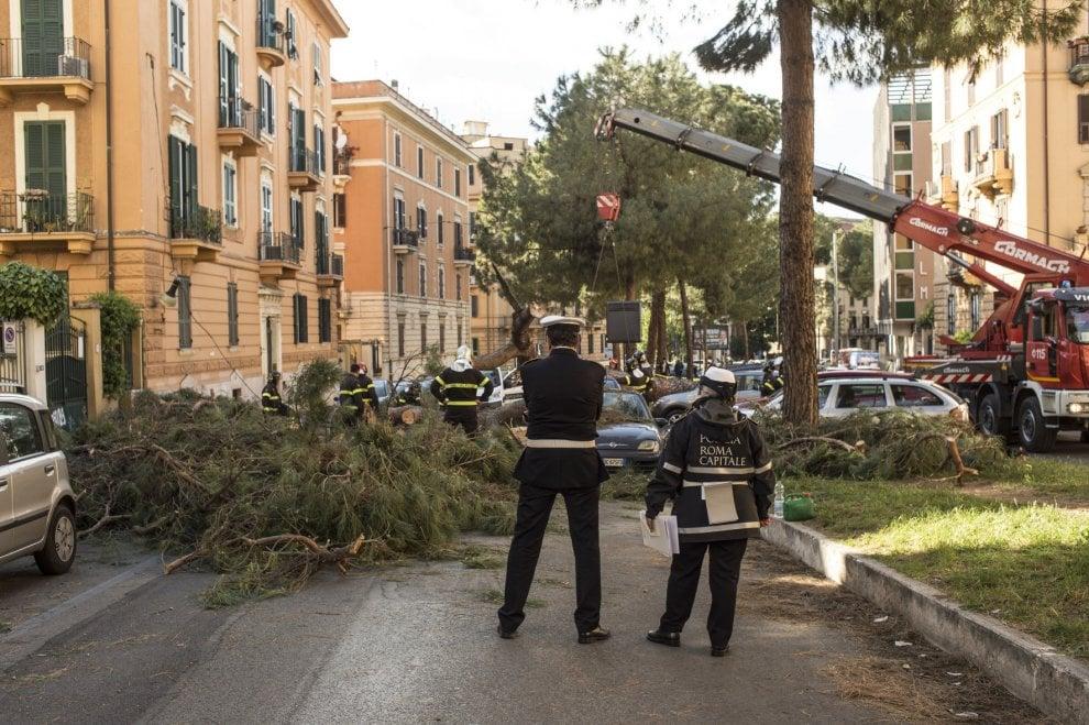 Roma, pino marittimo si abbatte su auto in corso Trieste: nessun ferito