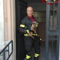 Roma, i pompieri salvano lo yorkshire Arturo