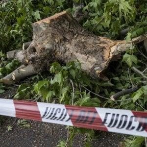 Roma, cade albero sul lungotevere Flaminio: ferita una donna