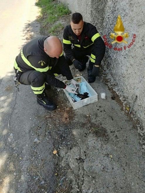 Roma, gattini gettati nella campana di vetro a Labaro: salvati dai pompieri
