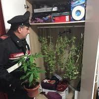 Roma, a 64 anni coltivava marijuana in casa, arrestata