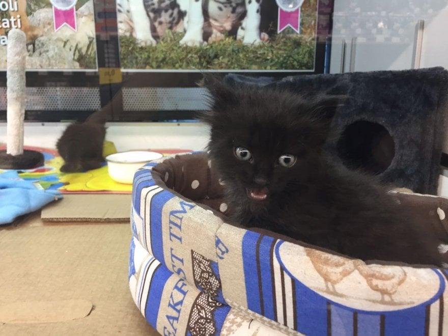 Rogo a Pomezia, due gattini salvati dai vigili del fuoco