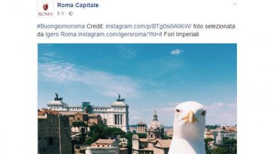 """Roma, foto col gabbiano sul profilo Facebook del Campidoglio. Poi le scuse: """"Pubblicata per errore"""""""